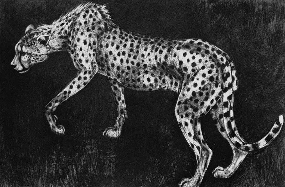Stalking Cheetah (2003)