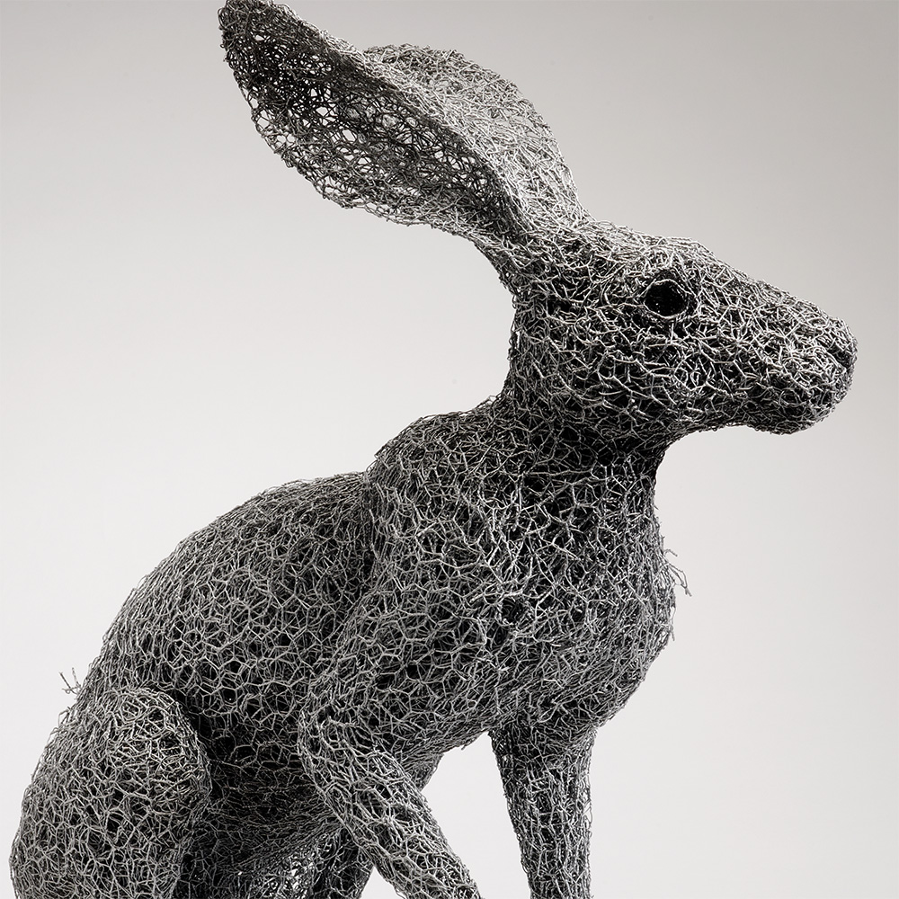 Arizona Jackrabbit (2013)